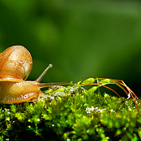 Acceleration of the little snail by Sony Arezki - Animals Other