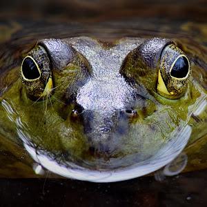 Frog Front Close4 VIB.jpg