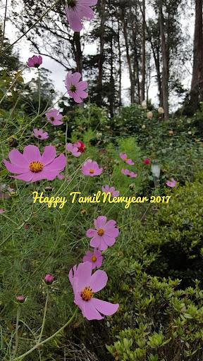 Tamil New year 2017 Wallpapers 0.1 screenshots 1