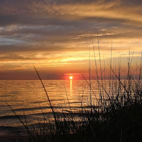 Sunset Through the Dunegrass by Jennifer Smusz - Landscapes Sunsets & Sunrises ( #lakemichigan, #sunset, #puremichigan, #dunegrass, #beach, #lake )