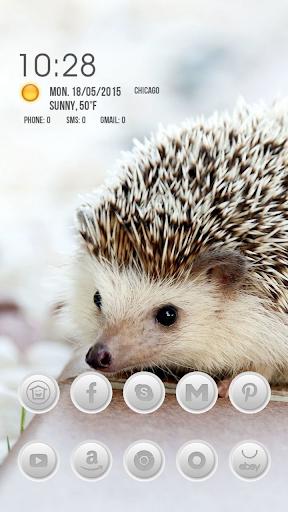 Hedgehog on the Book