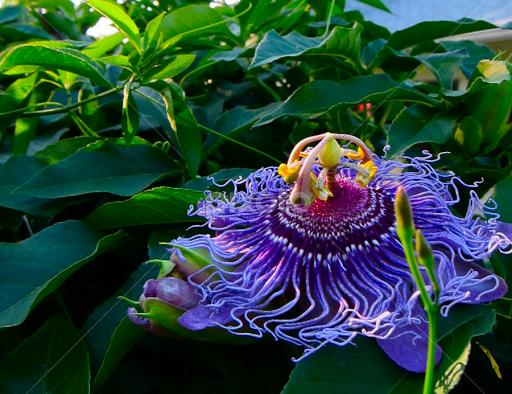 Good Morning Flowers 2011 2013 Nature Up Close Pixoto
