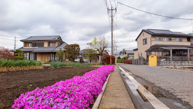 Photo: Vivid floral border on a roadside vegetable garden in Ōizumi, Ōra District, Gunma Prefecture. Read more about Oizumi: http://japanvisitor.blogspot.jp/2015/04/oizumibrazil-in-japan.html