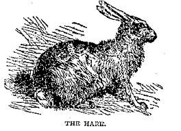 Image result for Putting out the hare in Ireland