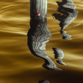 golden pool by David Ubach - Nature Up Close Water ( poles, reflections, golden, wood, water )