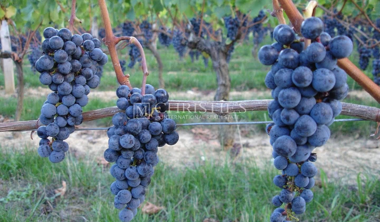 Vineyard Saint-Emilion