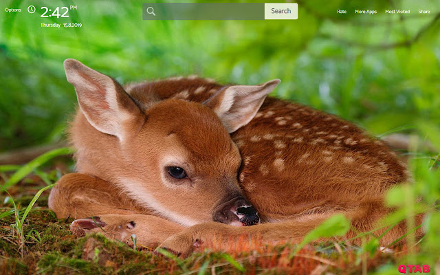 Baby Animals Wallpapers New Tab