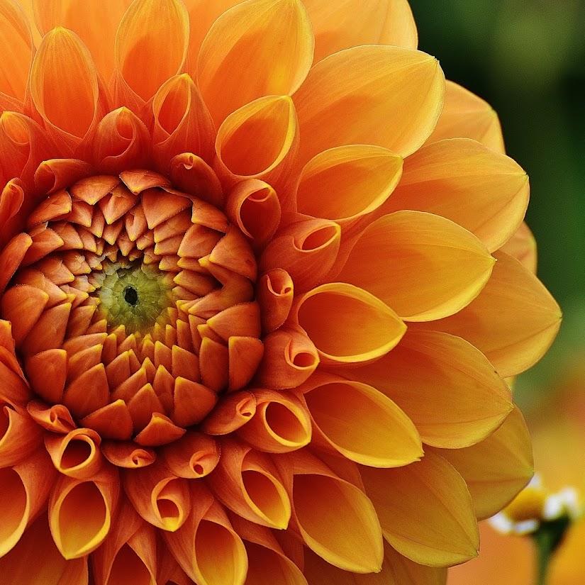 Ramos de flores originales con los colores del otoño