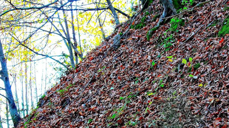 il vento tra gli alberi  di ottavioart