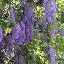 Nazareno, Purple wreath