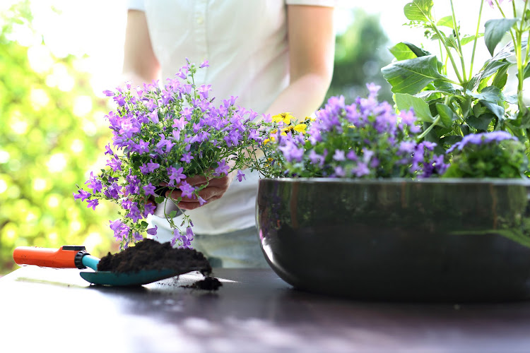 Just five minutes gardening outside gives you an improved sense of self-esteem.