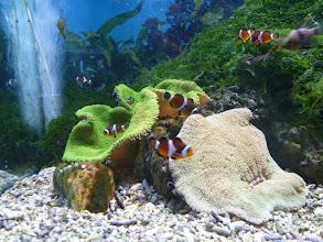 Photo: Nemo - návštěva Oceanária