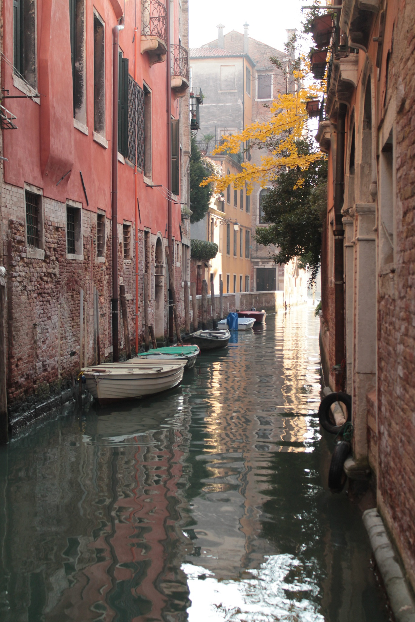 Venezia di Ari