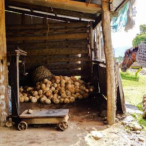 Horse With Basket by Wohvener Amada - Animals Horses ( animals, horse, cocounut farmer,  )