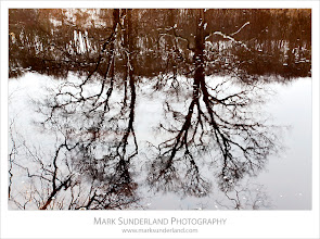 Photo: Winter Trees reflected in the River Wharfe, Strid Wood, Bolton Abbey, Yorkshire, England