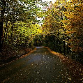 jesenna cesta by Ján Hrmo - City,  Street & Park  City Parks ( jesen, park, cesta, listie, stromy )