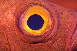 Photo: Common Bigeye, Tofo, Mozambique