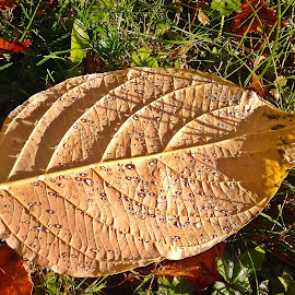 Leaf after rain by Ciprian Apetrei - Instagram & Mobile Android ( fall, nature up close, leaf, brittany, water drops )