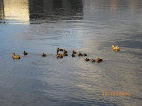 Photo: Ducks departing