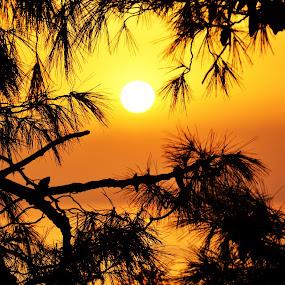 Castle sunset view by Daniela Elena - Landscapes Sunsets & Sunrises ( lovely view, orange, sunset, seaside )