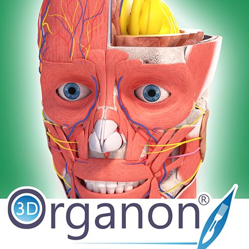 Baixar 3D Organon Anatomy | Enterprise edition para Android