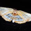 Tropical Leaf Moth