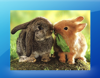 Cute Rabbit Picture - náhled