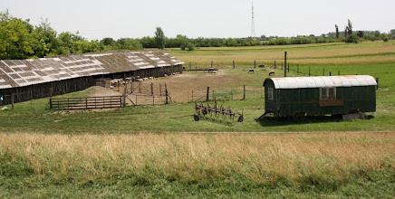Photo: Day 73 - Sheep Farm (Near Rackeve)