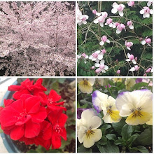 Photo: Rosy's spring flowers - Part 1 #intercer #flower #flowers #life #live #alive #fresh #tree #trees #magnolia #spring #petal #petals #red #green #yellow #pink - via Instagram, http://ift.tt/1hO02oc