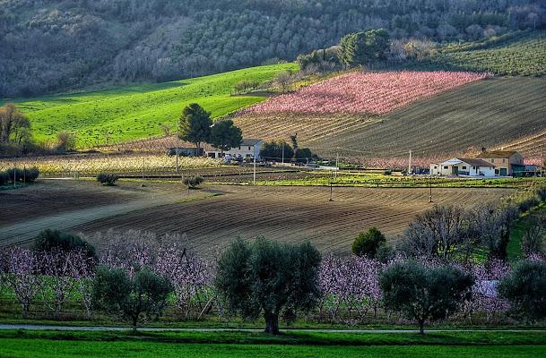 Primi colori di Primavera di pina_de_curtis