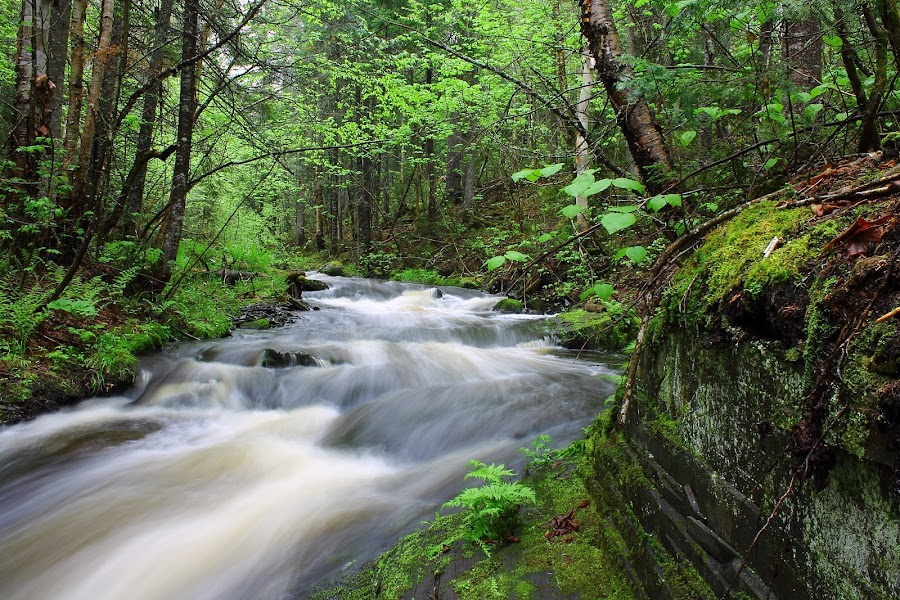 Falls Brook by Patrick Provencher - Landscapes Waterscapes ( brook )
