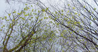 Photo: wirkt als würden Schmetterlinge gen Himmel steigen....