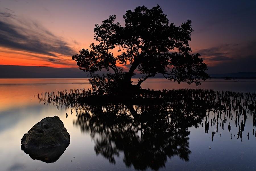 the guardian by Carlo Romero - Nature Up Close Trees & Bushes ( carlo antonio romero, tree, misamis oriental, carlo antonio romero photos, el salvador )