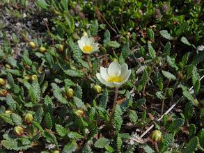 Photo: не помню,как зовут это растение, но оч.красиво. да?