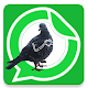Download Pigeon With Hands stickers for WhatsApp For PC Windows and Mac