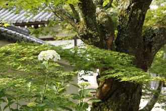 Photo: 北村