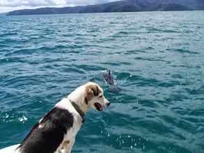 Photo: Dolphin!