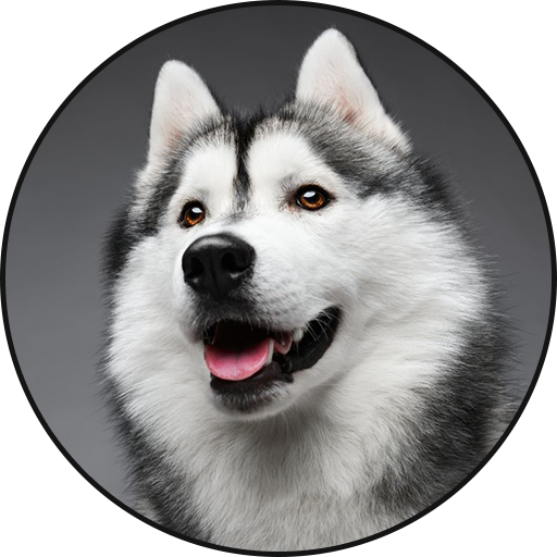 Siberian Husky Dog Sounds Android APK Download Free By Leafgreen
