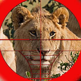 Lion Expert Hunter 3D
