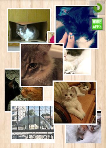 リアルタイム猫写真集
