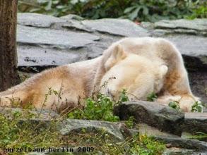 Photo: Knut genehmigt sich erst einmal ein Nickerchen ;-)