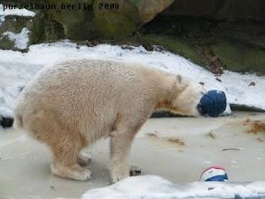 Photo: Der blaue Ball macht das Rennen ;-)
