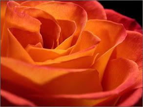 Fotografija: terapia orange 06