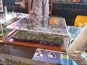 Photo: Stand de Sintegraf con modelizado topográfico en 3D