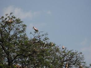 Photo: Storks in Kigali