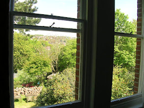 Photo: From the window of my bedroom. Saturday working in Hastings. A clear day, a green place.