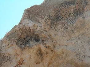 Photo: Fosilien am Cape Greko