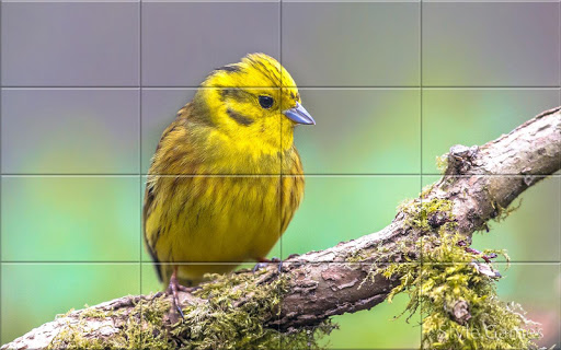 Sparrows Puzzle  screenshots 7