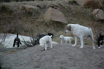 Photo: cuccioli a 66 gg con la madre