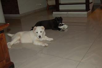 Photo: maschi BALLU e BOND 8-01-2012